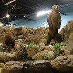 Foto de Rosenbruch Wildlife Museum