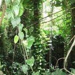 Rainforest Vegatation