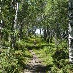 trail through Aspen