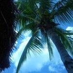 Palmier sur la plage!