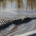 Everglades PABT