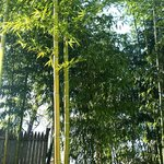 Beacon Bamboo Forest Foto