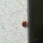 Found on bathroom wall