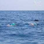 Nadando con el tiburón-ballena