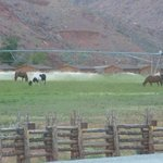 pasture -- for horses after riding those city slickerrs