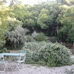 La vegetazione nel cortile del B&B