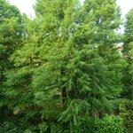Bick in den alten Baumbestand im Garten