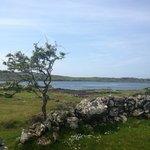 Ancient stone & hawthorn