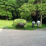 Лошади и пума