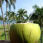 Free coconut!