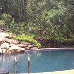 swimming pool jungle side