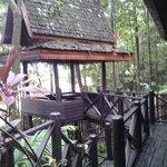 terrace jungle room