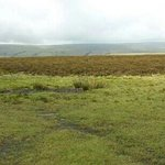 on the moor after walking from pub