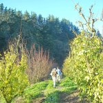 Our hike through the orchard