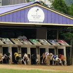 Greyhound Racing in Nearby Wheeling WV