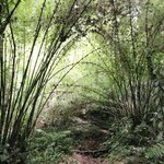 High altitude bamboo forest