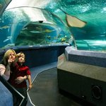 Photo provided by National Aquarium