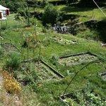 le beau jardin potager ... bio