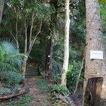 Trees cataloged