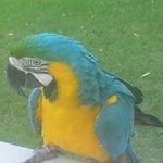Resident Parrot - very photogenic