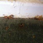 Fungi along skirting boards