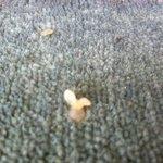 spores of fungi in carpet