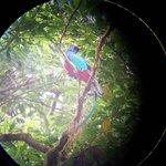 Quetzal (slangevogel )
