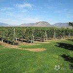 Countryside Vineyard