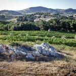 Milagro Farm Vineyards & Winery looking west
