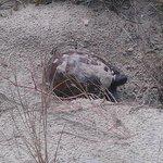Turtle on the dunes.