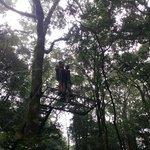 From the Tarzan swing