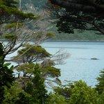 Parque Nac. Tierra del Fuego