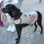 Care dog for veterans