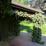Beautiful green vines growing on the porch of Eagle cabin