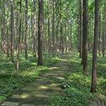 Bird Walk Trail