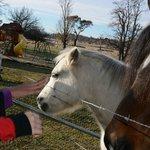 Friendly horses!