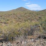 Desert outside Wickenburg, AZ