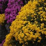 the Alpine Garden at the Neuberger Hof in full bloom