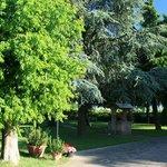 parco con alberi ad alto fusto