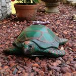 Nice garden with turtles