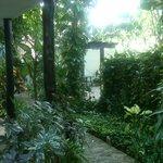 Posado el Moro lush green courtyard Pto Morelos