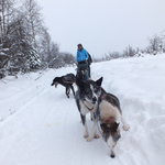 Mushing school