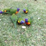 Right outside our room -  lorikeet lodge