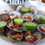 live chocolate clams