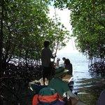 マングローブの森から海へ