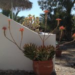 around Pelagos