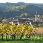 Un charmant village dans le vignoble