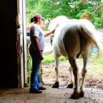 Gentle horses and friendly wranglers who love their jobs and care about our animals.