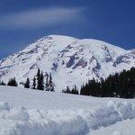 Mt. Rainier from Paradise
