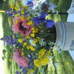 fresh cut flowers in season